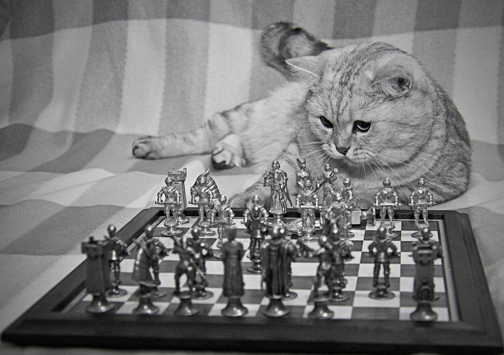 Смешные картинки в шахматах, программа картинки анимационные